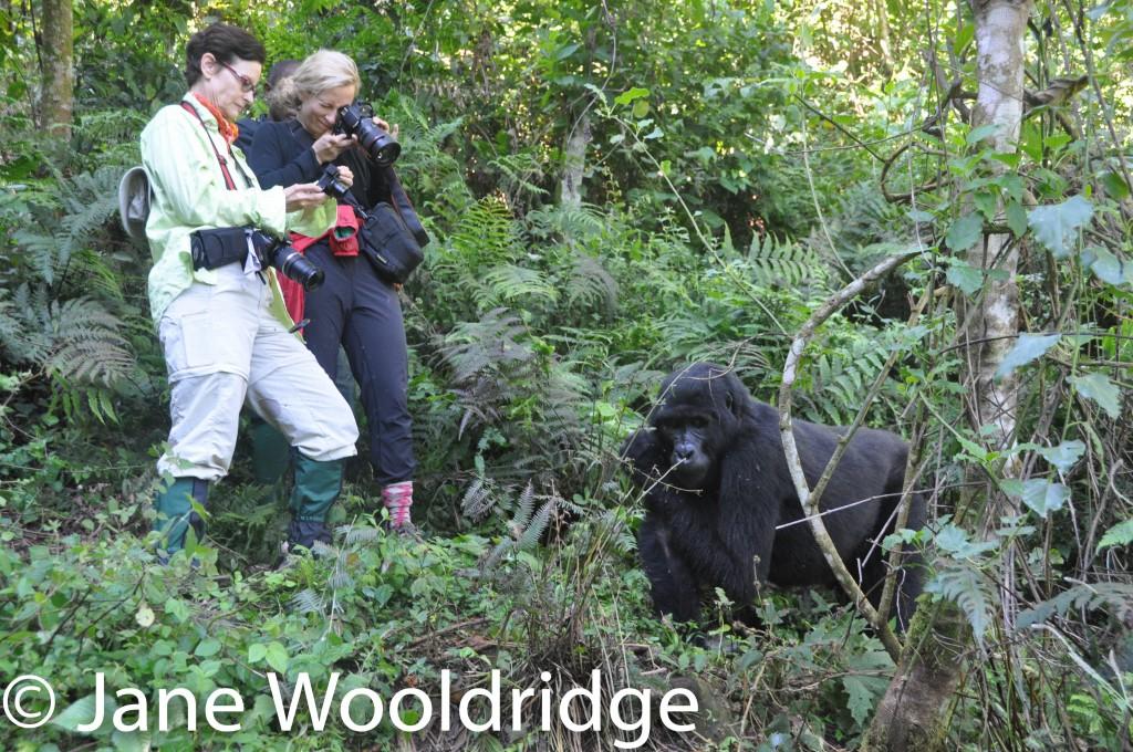 In Uganda: Trekking with mountain gorillas